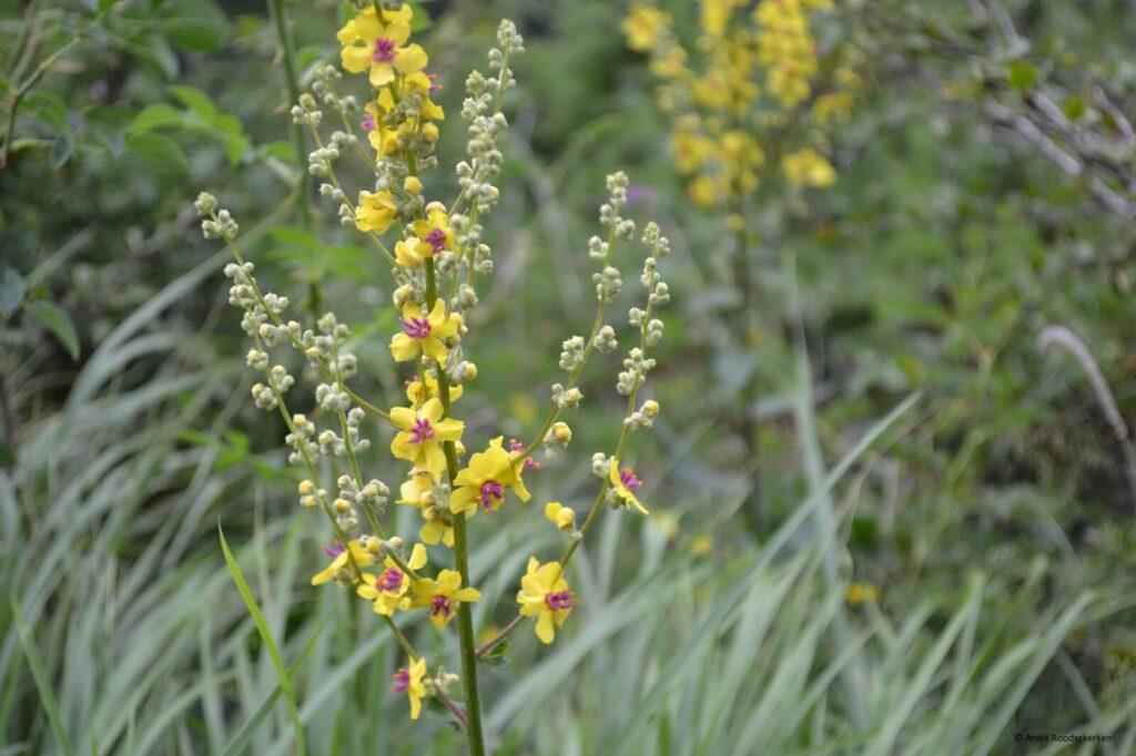 Bloemen in Zuid-Tirol