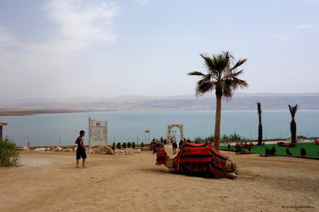 Een kameel kijkt uit over de Dode Zee in Israël