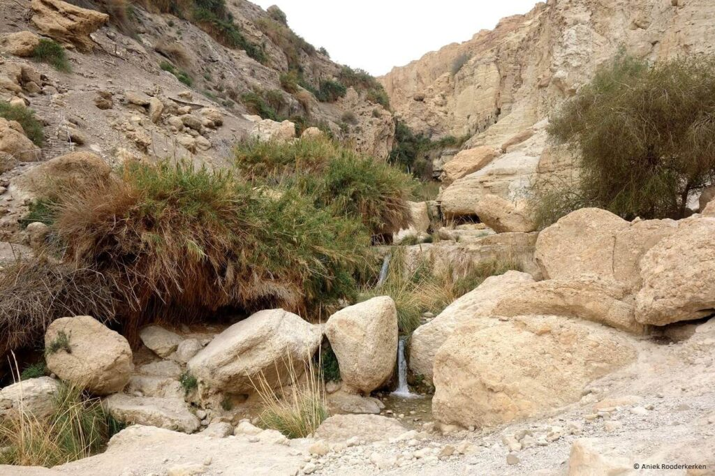 Ein Gedi natuurpark bezoeken in Israël