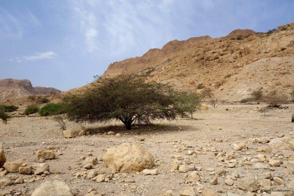 Hiken in Ein Gedi Natural Park Israël