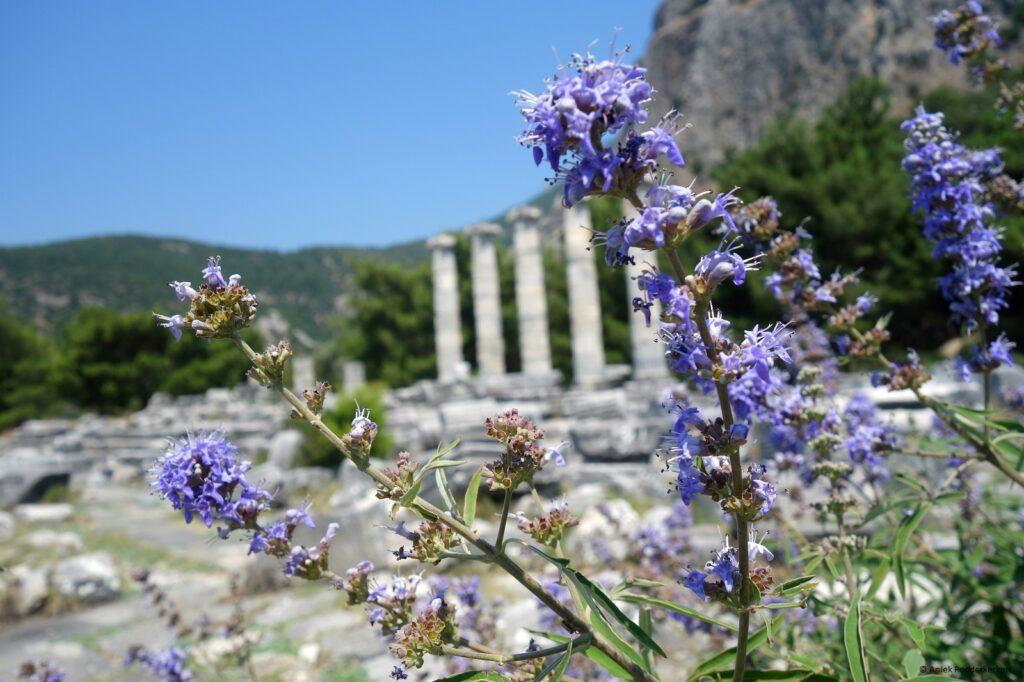 Archeologische parel: Priëne in Turkije