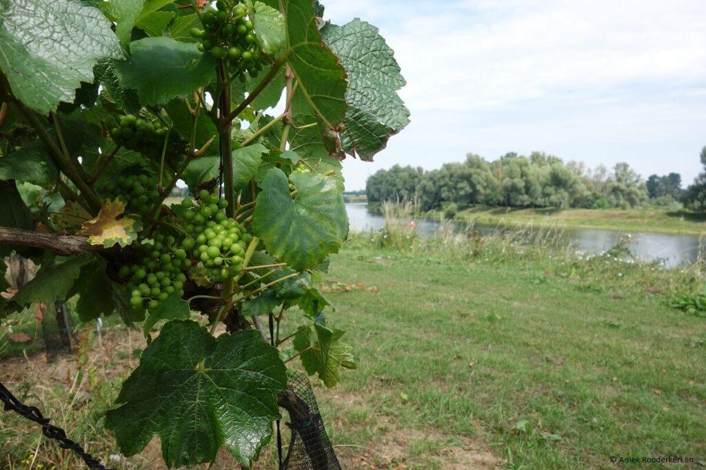 Wijndomein Aldeneyck, Pinot Gris uit Limburg