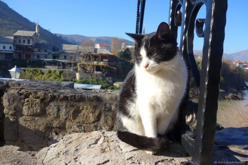 Kat in Mostar