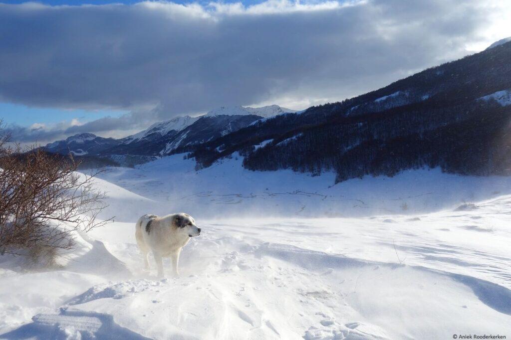 Sneeuwschoenwandelen in Bosnië en Herzegovina