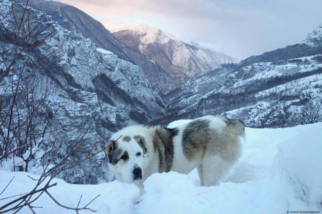 Sneeuwschoenwandelen in Bosnië