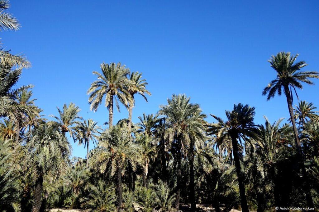 De palmtuinen van Elche