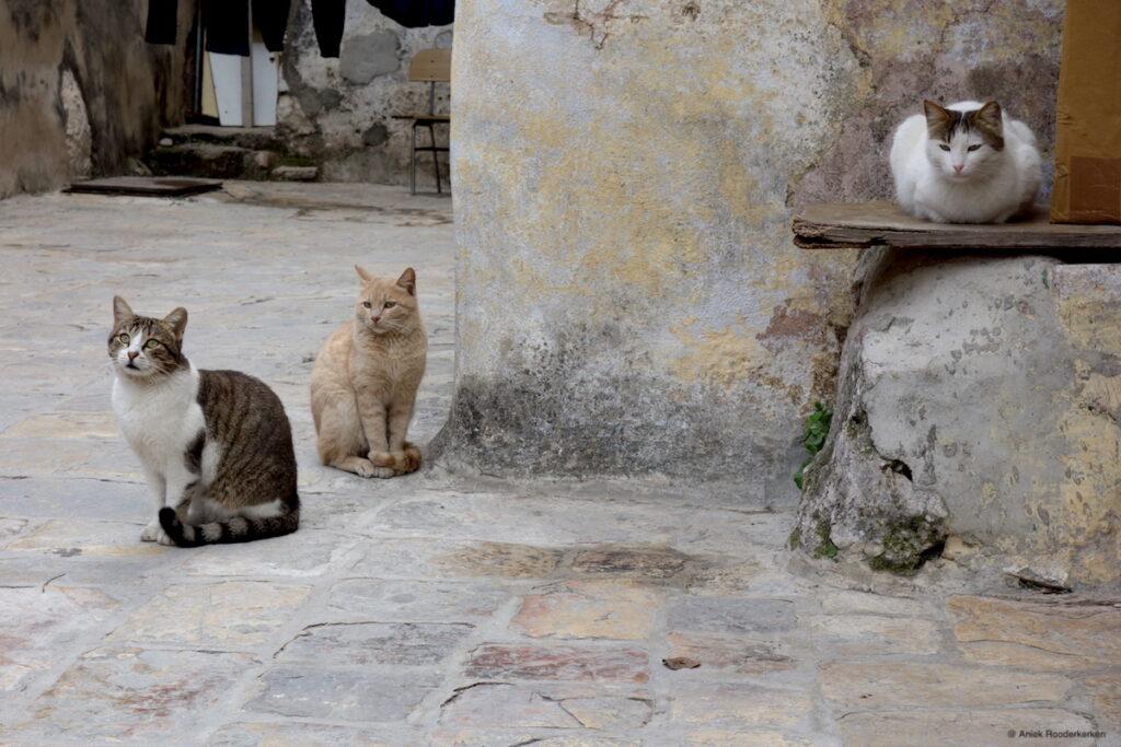 Katten op het dak van de Heilig Grafkerk in Jeruzalem