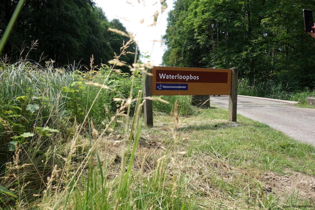 Waterloopbos in Flevoland