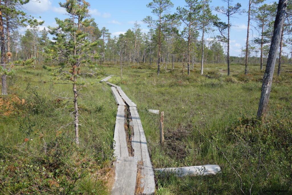 Slengmyran: hiken in Zweeds Lapland