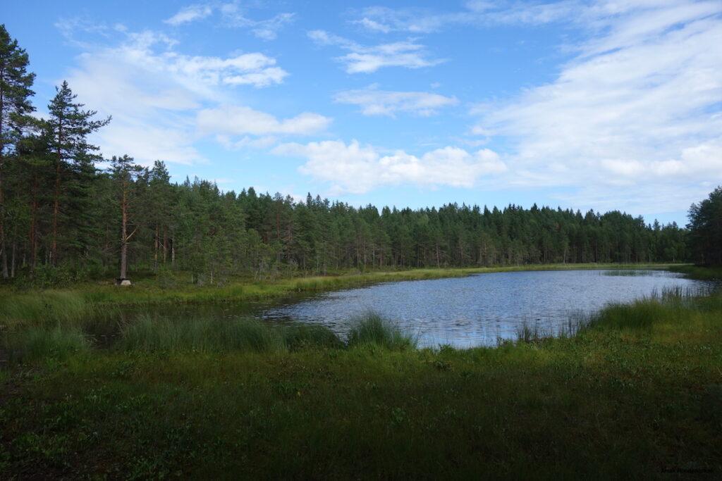 Vitberget, een natuurgebied net boven Skellefteå
