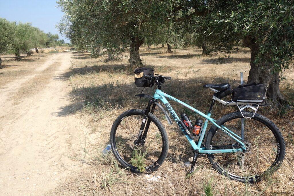 Vakantiefietsen in Girona: tussen de olijfbomen