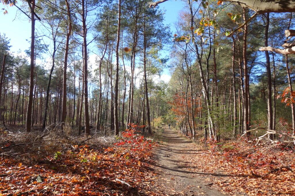 In oktober hullen de bomen op de Sallandse Heuvelrug in herfstkleuren