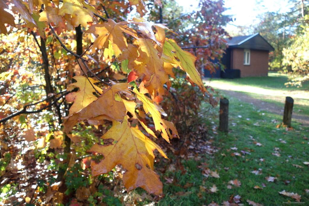 Herfst op de Sallandse Heuvelrug