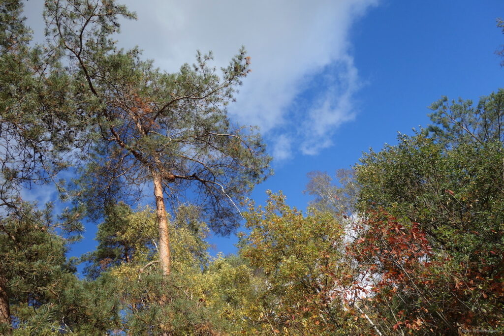 Herfstkleuren tegen een blauwe lucht