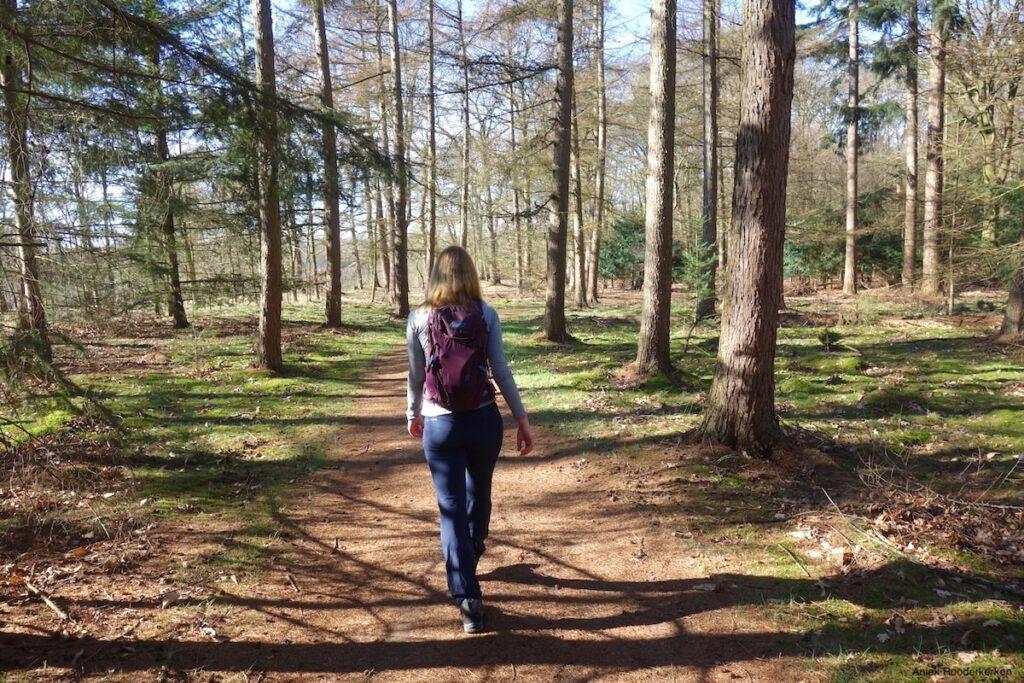 Het is moeilijk te geloven dat het eind februari is, wanneer je door het bos loopt.