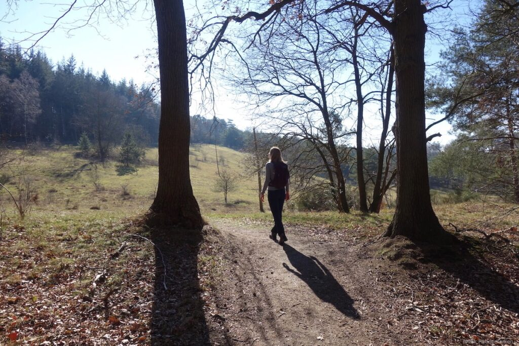 Het is heerlijk wandelen in het bos bij de Paltz Soesterberg.
