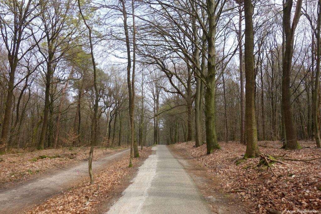 Fietsen in de bossen rondom Rrhenen
