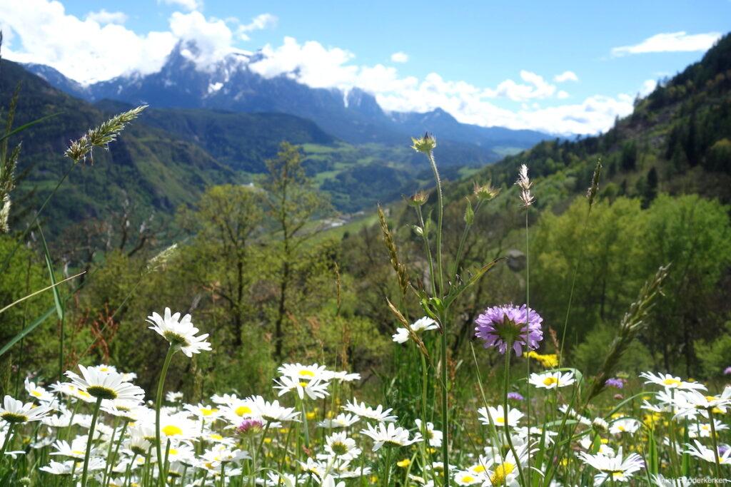 Weide vol Alpenbloemen