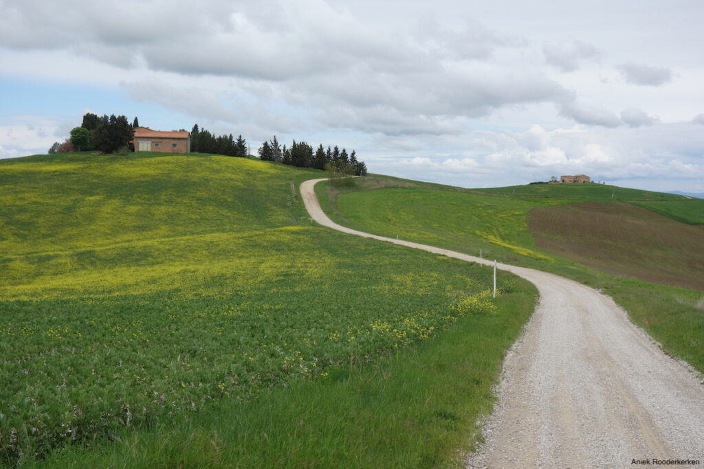 Ik fiets een deel van 'l Eroica, over de witte wegen van Toscane