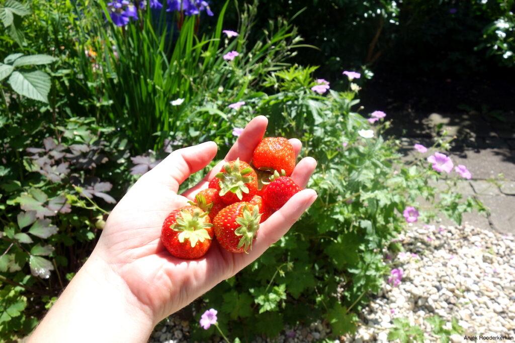 Aardbeien!