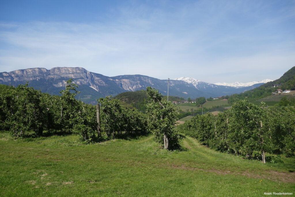 De appelgaarden van de Wernerhof bij Bolzano.