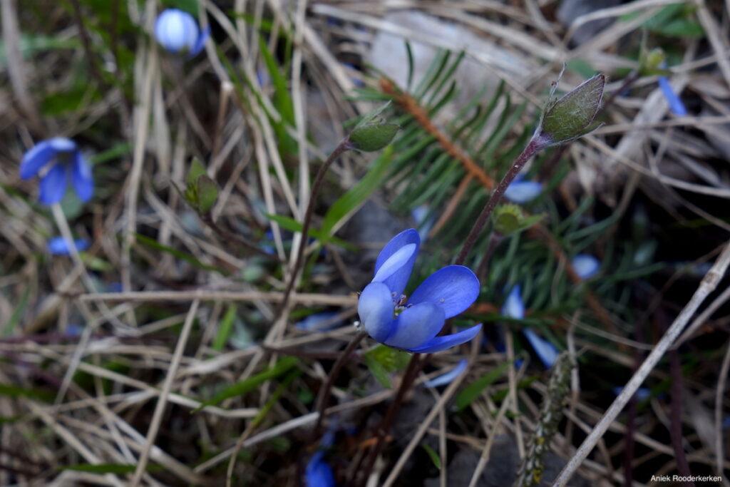Bloemen op de hoogvlakte Salten in Zuid-Tirol