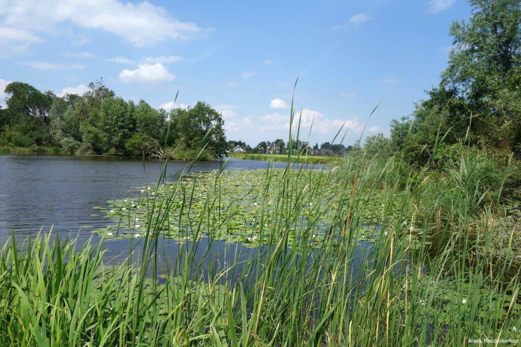 Plassen en polders van de Ronde Venen
