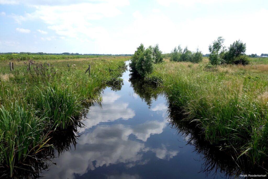 Reflecties in het water