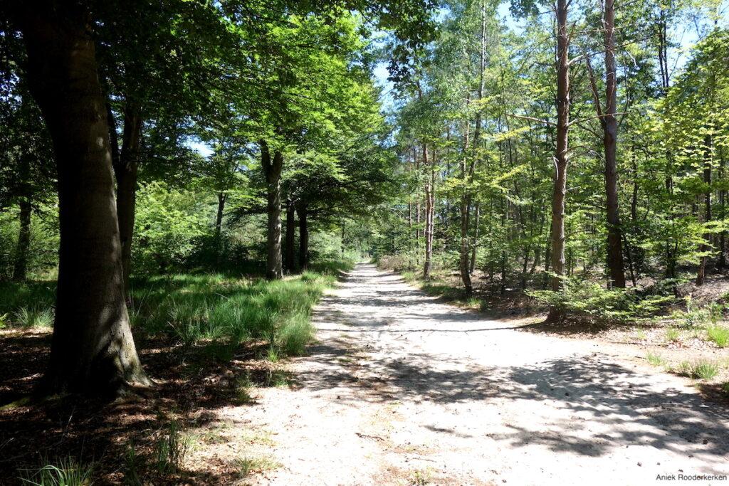 Het bos bij Maarn