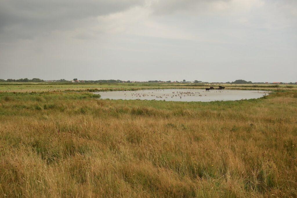 Nationaal Park de Duinen van Texel