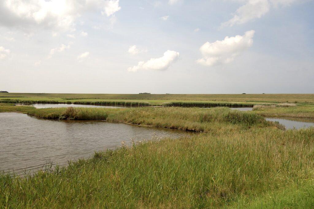 Natuurgebied op het eiland Texel