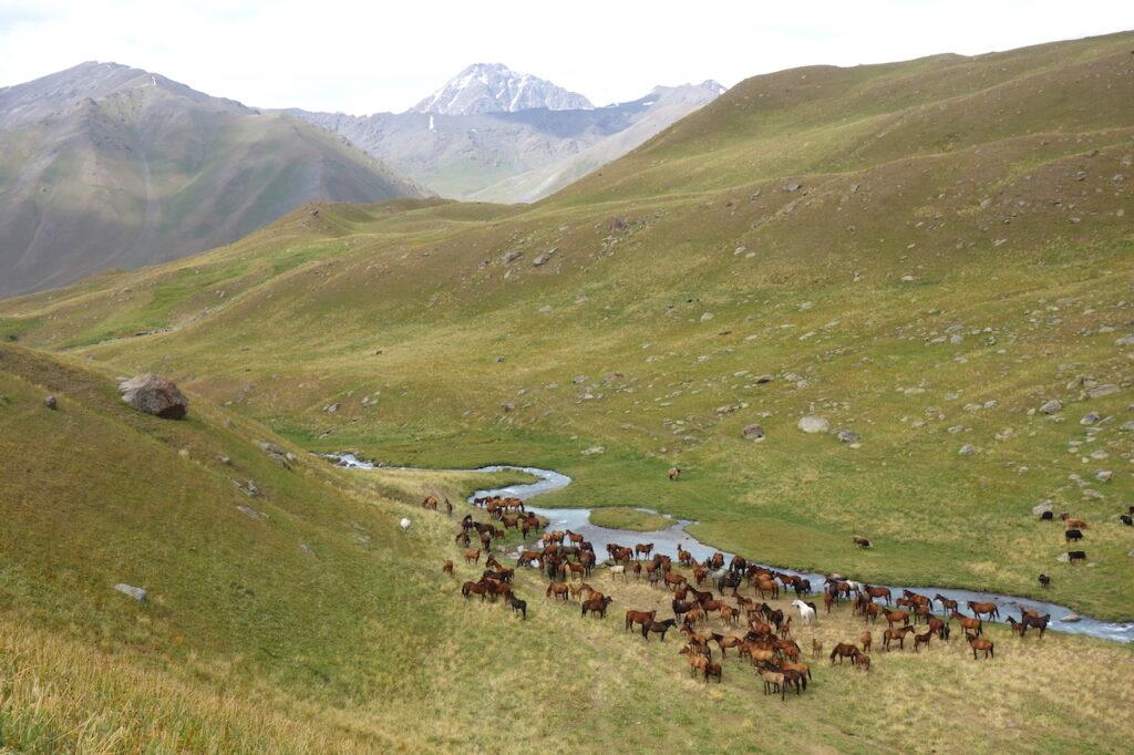 Paarden  in een klein zijdal van de Karakol-rivier