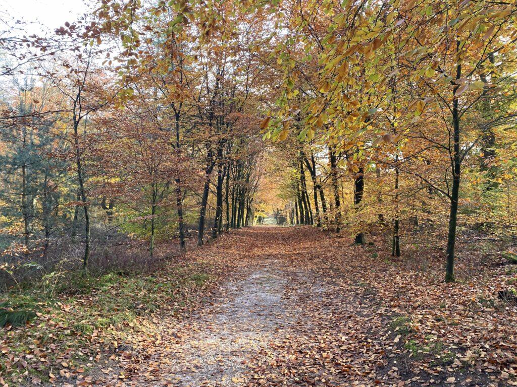 Herfstkleuren in het bos bij Elst, provincie Utrecht