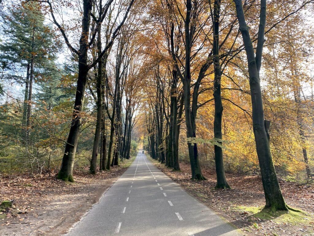 De Defensieweg is een heuvelachtige weg die loopt tussen Rhenen en Elst