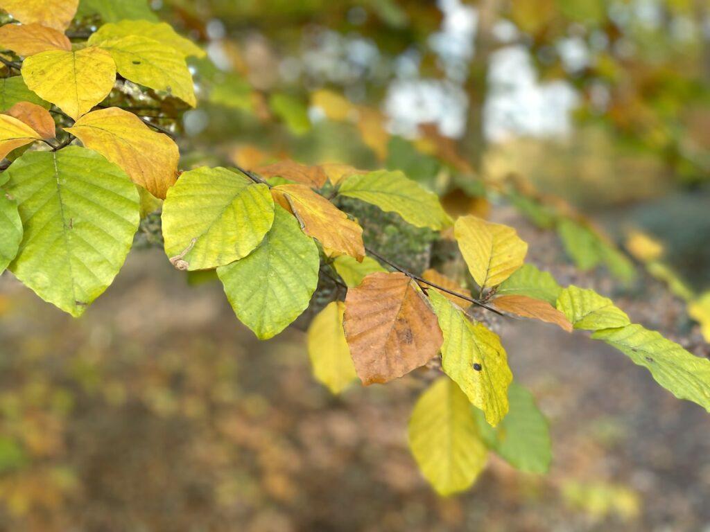 Gekleurde bladeren op de heuvelrug