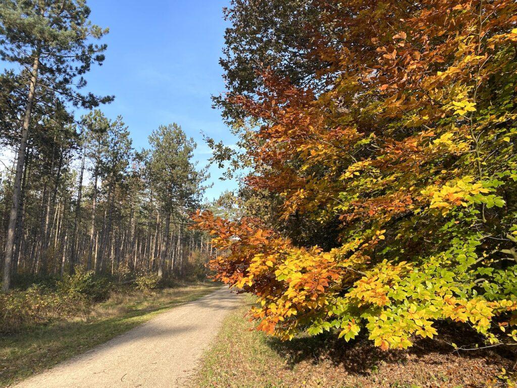 Alle kleuren van de herfst in Boswachterij de Amerongse Berg