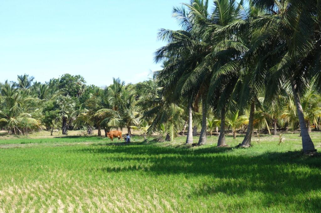 Kleurrijke tempels en rijstvelden in Tamil Nadu
