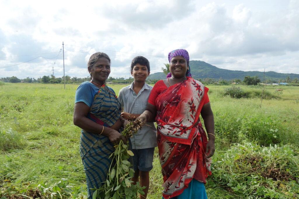Vrouwen oogsten pinda's in Tamil Nadu