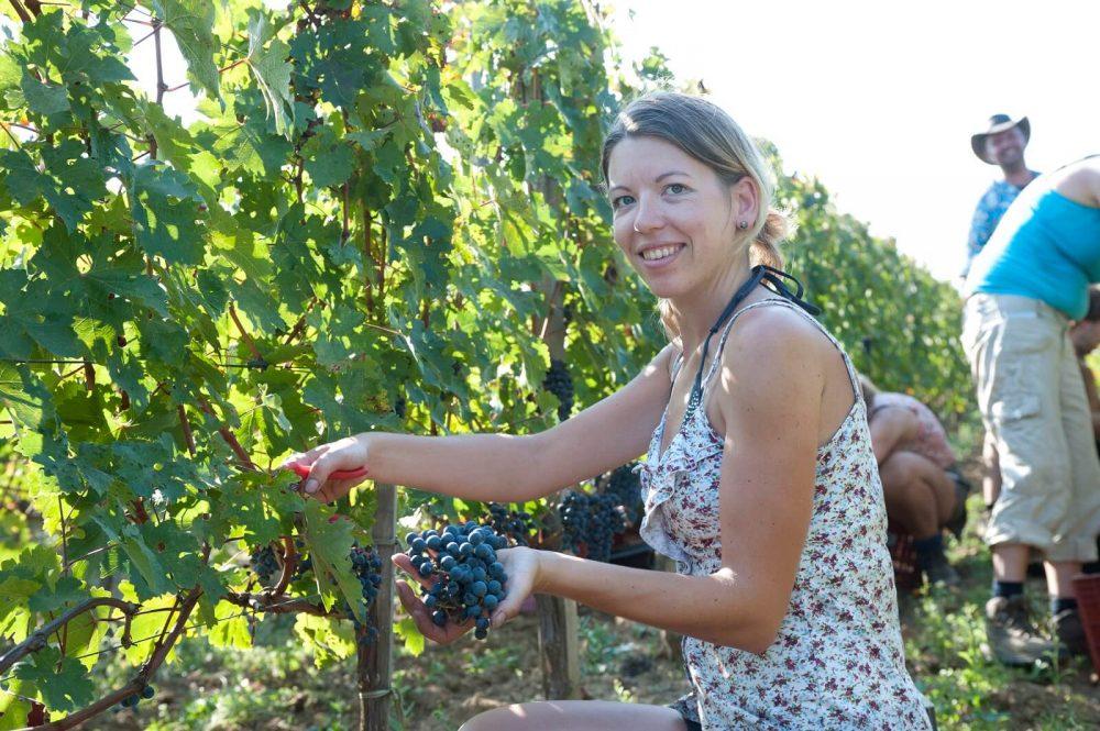 Als een Gort in Frankrijk. Druivenplukken in de wijngaard