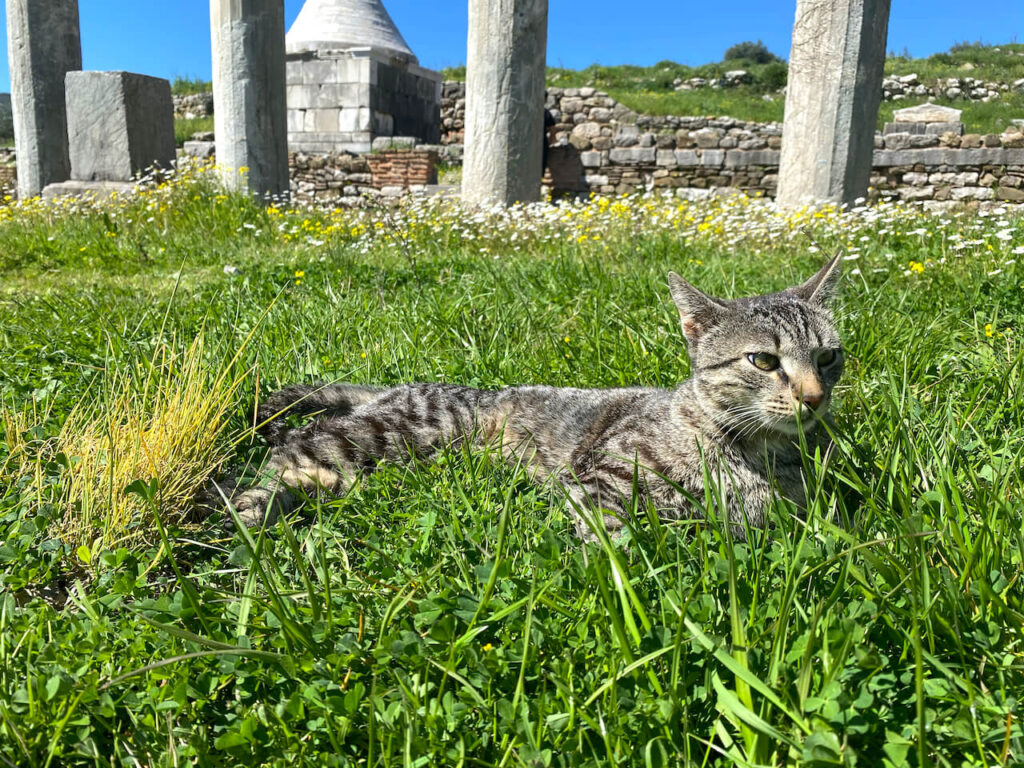 Kat in het stadion van Oud-Messini