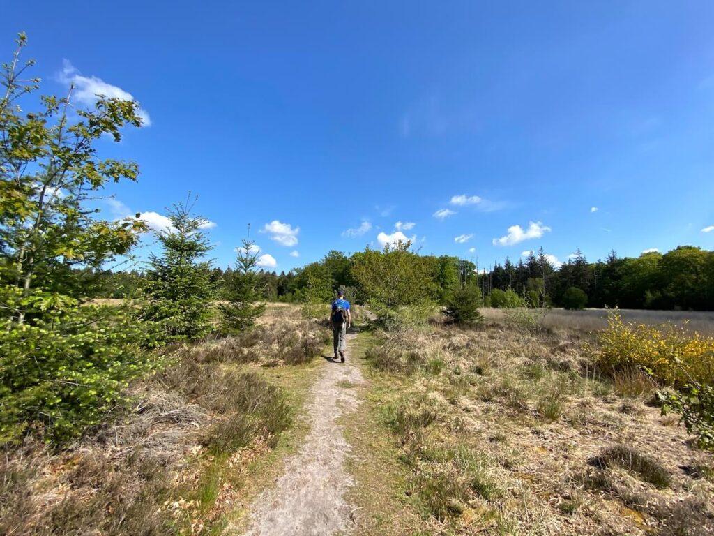 Wandelen over smalle paden tussen het Blanke Veen