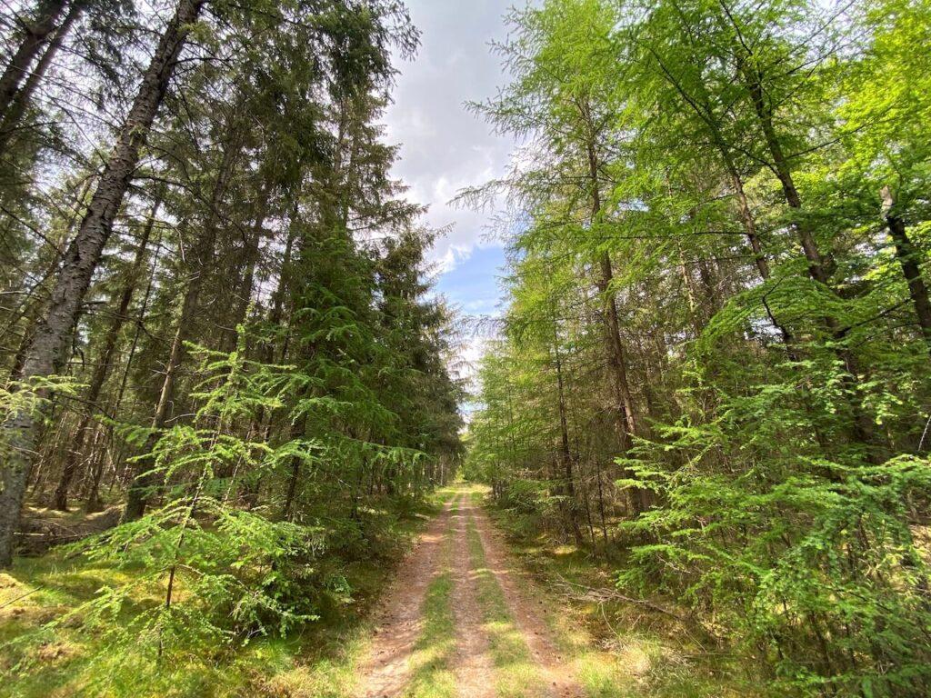 Wandelen door de bossen van Drenthe