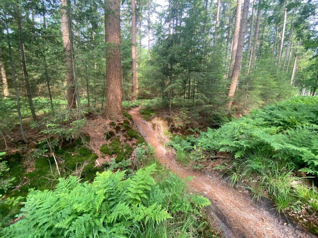 Single track tijdens de Mountainbikeroute Beetsterzwaag