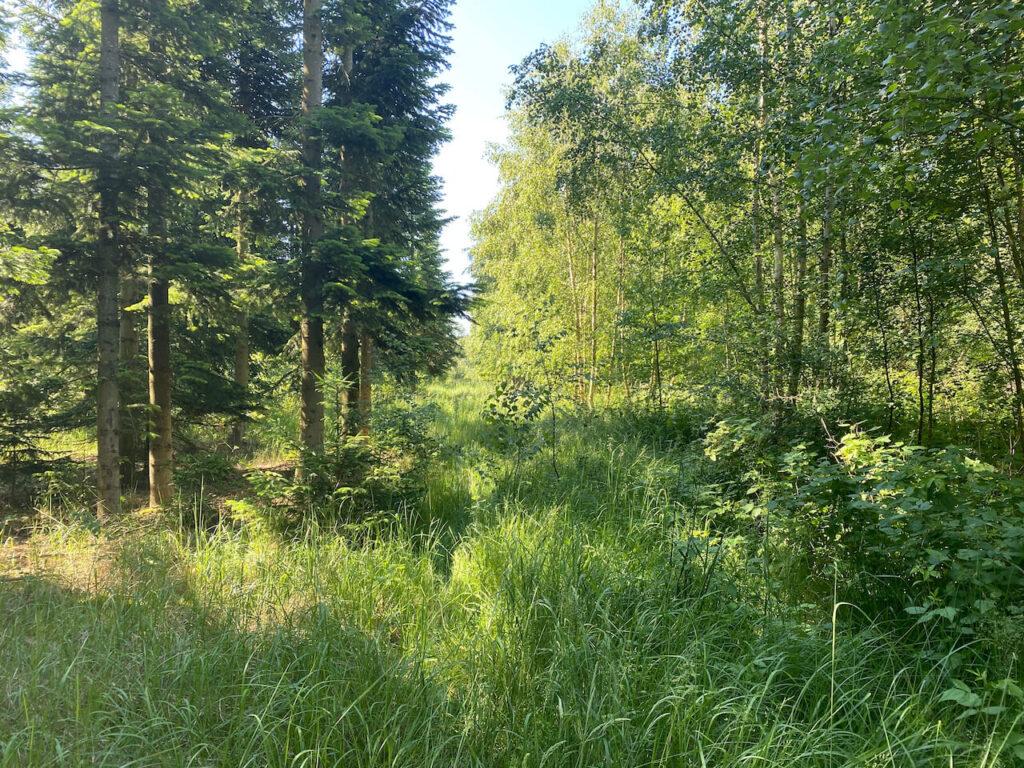 Gravelfietsen door het bos in Duitsland