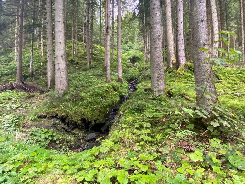Gesäuse Hüttenrunde | Gesäuse in de Steiermark