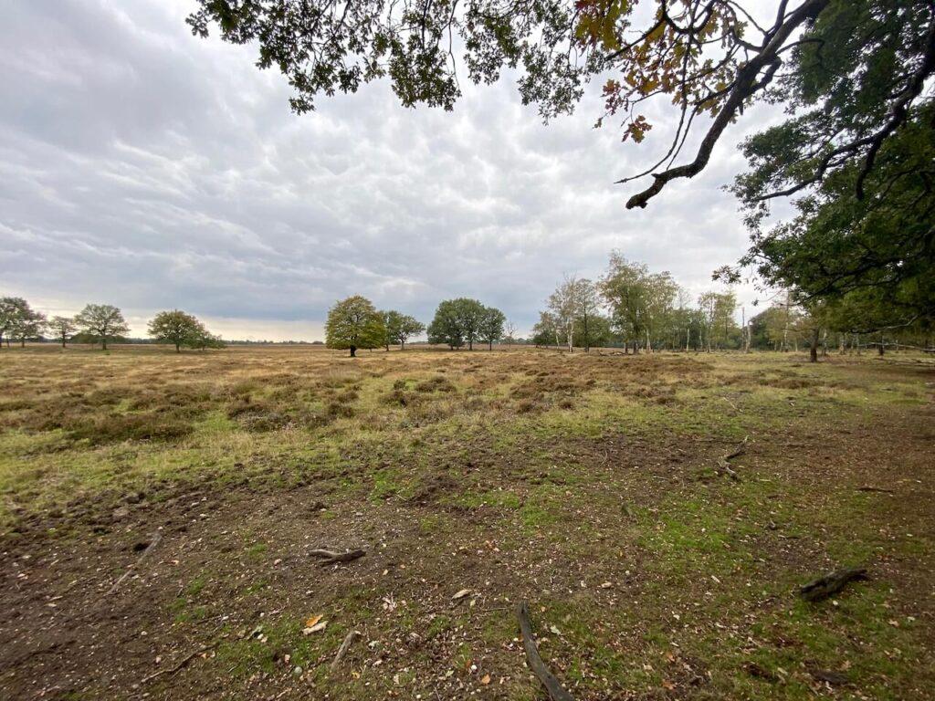 Deelerwoud tussen de Nationale Parken Hoge Veluwe en Veluwezoom