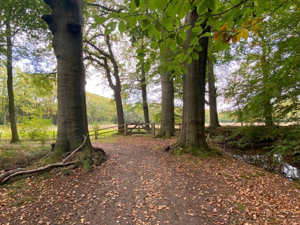 Fietspad door het bos bij Stoutenburg Noord