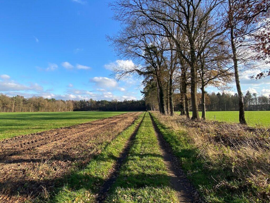 Door het veld