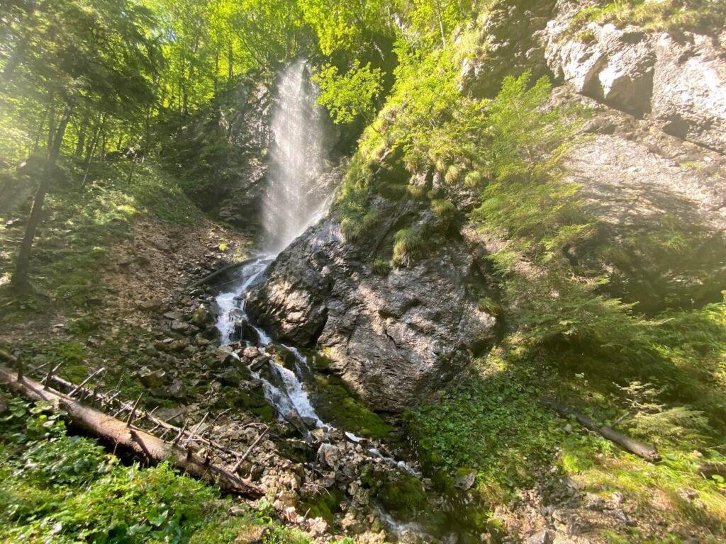 Een oude bosweg voert door de Hartelsgraben