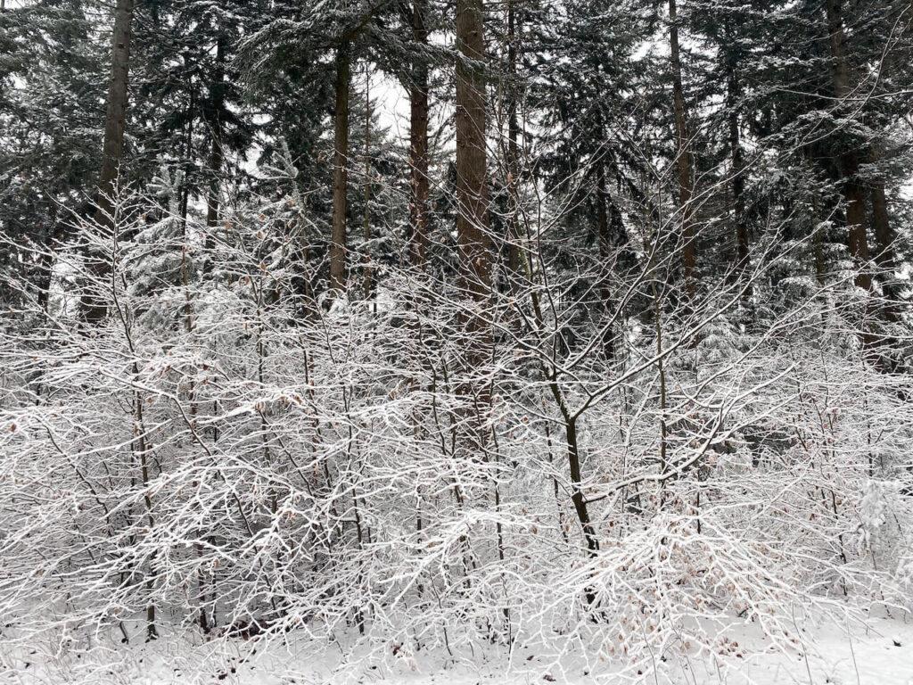 Lage Vuursche in de sneeuw